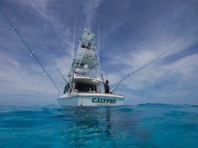 Calypso Fishing Adventures is fully licensed and surveyed with the Captain and crew