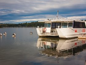 Cruise the scenic River on a half day tour