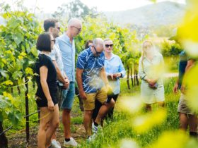 Vine to Wine experience and local produce tasting at Nashdale Lane Wines
