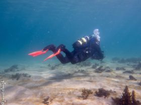 Diving at Cabbage Tree Bay
