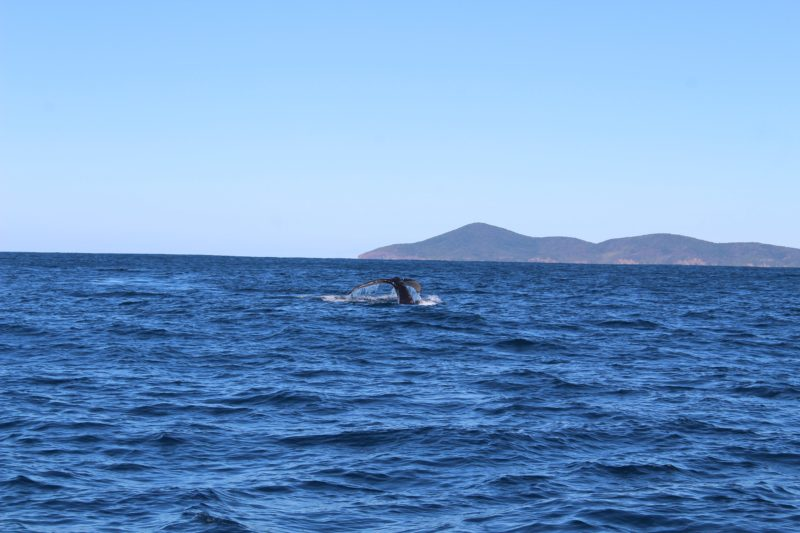 whale watch boat tour forster