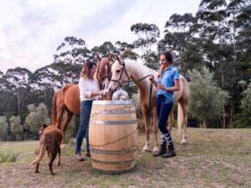 Champagne Hill, horses and wine, wine barrel, shoalhaven