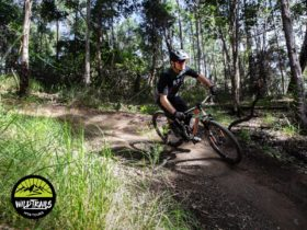 One of many trails on the Coffs Coast