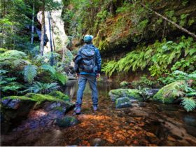 Blue Mountains guided adventure tours