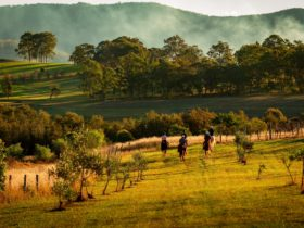 Horseback riding over the hills of Hanging Tree wines through the vineyard.