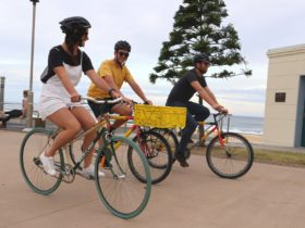Newy Rides