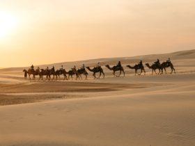 Oakfieldranch Camel Rides