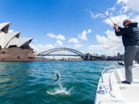 Harbour Fishing