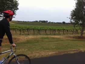 Cycling past vineyards in Mudgee, New South Wales