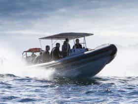Original 9927849 Tnsw Underwatersafari5 Jonathon Poyner Vjcha02