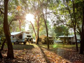 Camping beside the billabong under the trees