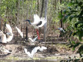 bird watching from nature hide with accommodation at Rakhi Retreat, Northern Territory