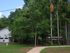 Batchelor Primary School site - now Parks & Wildlife Office.