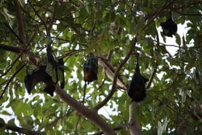 Manngarre Rainforest Walk, Kakadu Area, Northern Territory, Australia