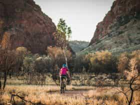A woman rides a mountain bike on the bike path towards Simpsons Gap