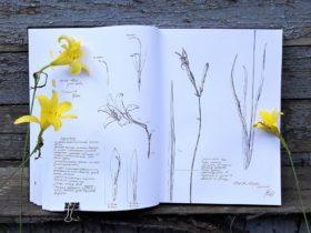 Botanical Journaling and Sketching