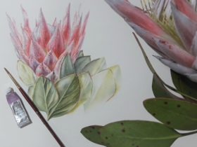 immerse Two-Day Botanical Illustration Workshop