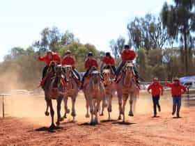 Five camels with riders barrelling down the red dirt racecourse