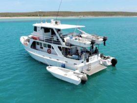 Australian Sportfishing Charters