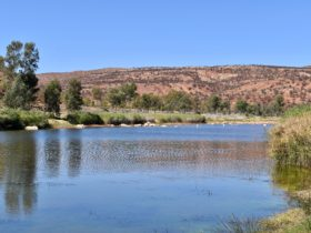 One of the more remote waterholes in Central Australia.