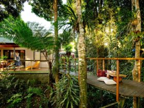 "alt=""Veranda and walkway leads into the rain forest overlooking the river at Sharlynn"""