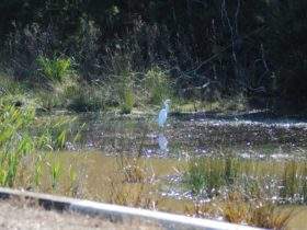 photo of a shore bird wading in a waterway