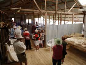 A tour group in the shearing shed