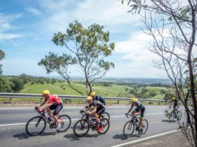 Masters Road Race