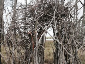 Sandy Ward, 'Untitled' (detail) 2018. Melomy's Wetlands, Canaipa Island. Courtesy of the artist.