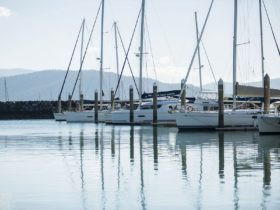 Multiple sailing vessels berthed in a marina