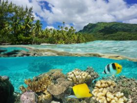 Coral Reef and tropical fish in clear water by a mountainous tropical island