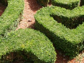 Beautiful Example how Hedge can become a Feature in your garden