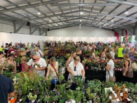 Plant Sale at Carrara Markets