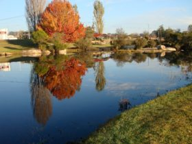 Autumn in Stanthorpe