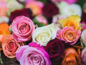 Rose Masterclass