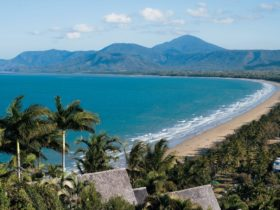 A sandy beach, clear waters and palm trees at Four Mile Beach, Port Douglas