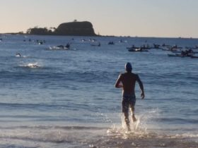 Swim The Island Mudjimba