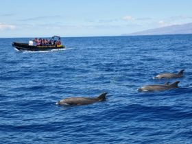 Adventure Rafting Wildlife Safari Mooloolaba