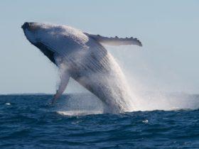 Adventure Rafting Whale Watching Sunshine Coast