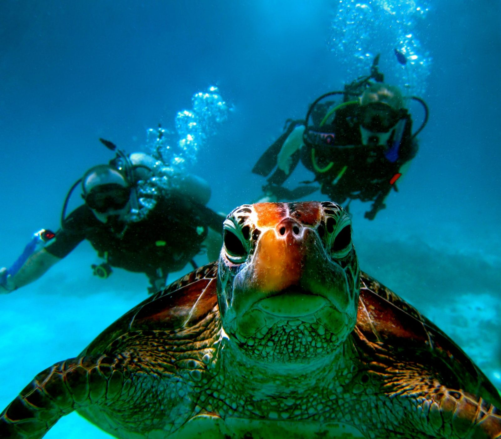 Divers with turtle