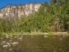 Tour group crosses a crystal clear creek at Carnarvon Gorge, with soaring sandstone cliffs behind.