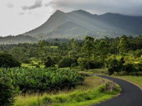 The Road to Mt Bartle Frere