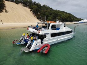 Dolphin_Wild_Island_Cruises_Small_Groups_Moreton_Island