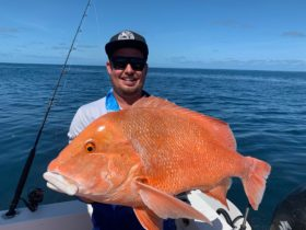PB Red Emperor caught out of Yeppoon, Southern Barrier Reef