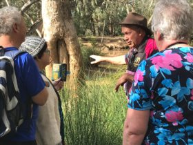 Nullawokka First Nations Tours