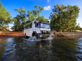 Cape York - Outback Spirit Tours