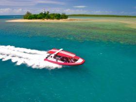 Fast, fun boat trips to the reef