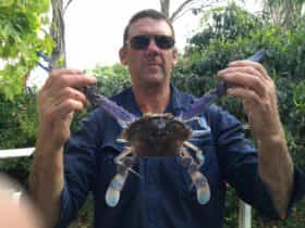 Go raking and get a feed of crabs.