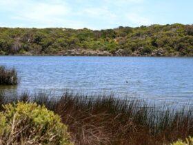 Little Dip Conservation Park