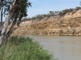 The Murray River flows alongside the Holder Cliffs at Maize Island Lagoon Conservation Park.